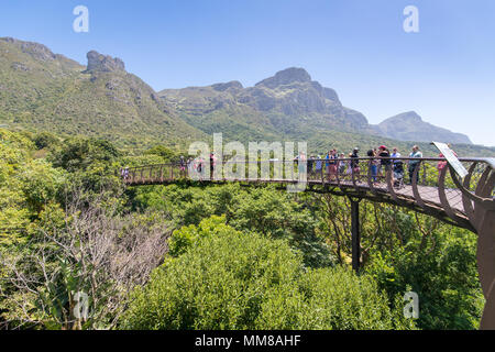 Treetop view of the Centenary Tree Canopy Walkway at the Kirstenbosch Botanical Gardens in Cape Town, South Africa - Stock Photo