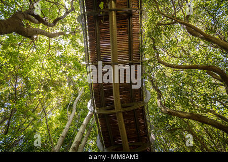 View from below of The Centenary Tree Canopy Walkway at the Kirstenbosch Botanical Gardens in Cape Town, South Africa - Stock Photo