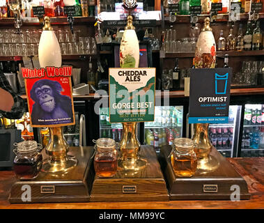 Winter Woolly, Gorge Best, Optimist Beer pumps on a bar, in a traditional English pub, England, UK - Stock Photo