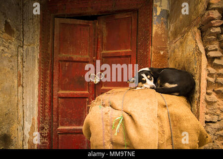 A cute black dog is sleeping in front of a red door in India. - Stock Photo