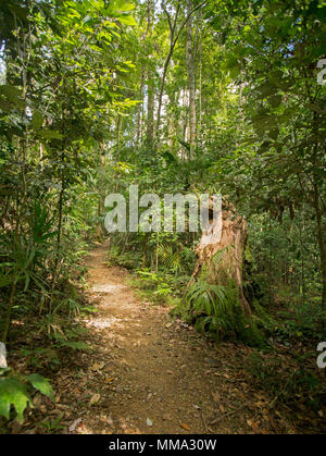 Walking track through dense emerald green vegetation of rainforest in Eungalla National Park Queensland Australia - Stock Photo