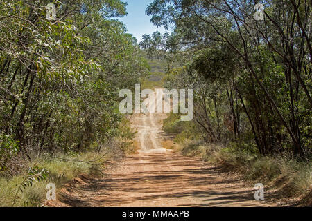 Landscape with woodlands of eucalyptus trees severed by narrow dirt road in Minerva Hills National Park, near Springsure, Queensland Australia - Stock Photo