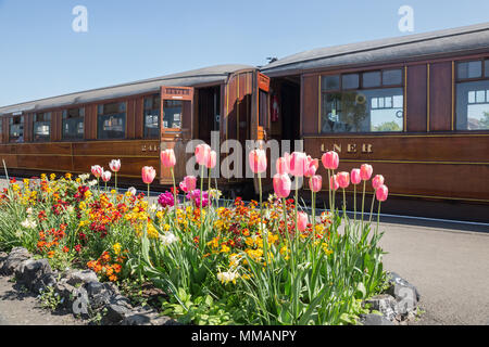 Vintage railway carriages, doors open waiting for passengers to board for steam train ride. Beautiful spring flower bed in bloom on station platform. - Stock Photo