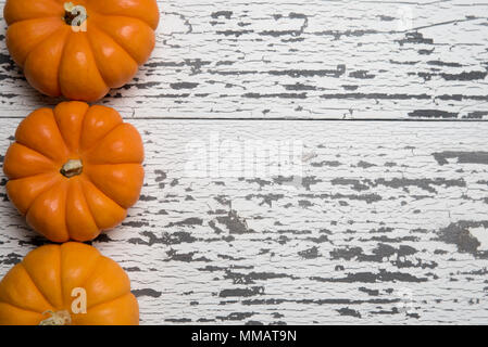 A row of mini pumpkins on a white wooden plank background with copy space - Stock Photo