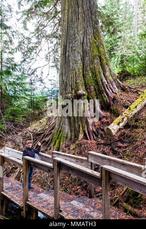 woman stands in front of a beautiful old growth western red cedar tree - Stock Photo