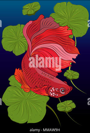 Vector color drawing of  betta or simese fighting fish illustation. - Stock Photo