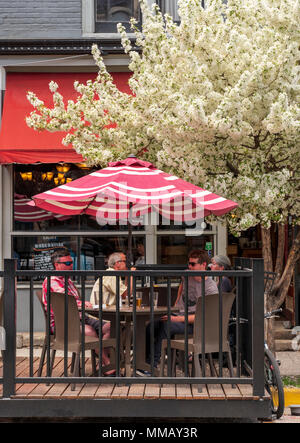 Flowering Cherry Blossom tree; Prunus; Currents restaurant & cafe; Salida; Colorado; USA - Stock Photo