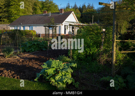 A rural bungalow with on fertile land where homegrown veg and fruit like rhubarb is produced, on 5th May 2018, in Wrington, North Somerset, England. - Stock Photo