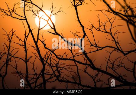 Sun rising in Bandhavgarh National Park, Madhya Pradesh India - Stock Photo