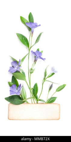 Spring flowers Periwinkle isolated in white, top view. Valentine's background. Flowers pattern texture - Stock Photo