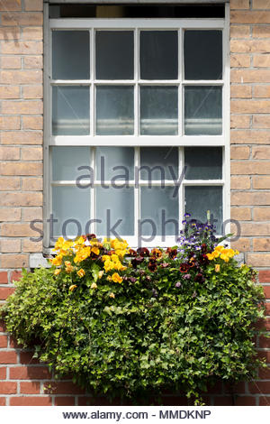 Looking up at a slightly open sash window and a flower filled window box underneath, Dorset, England, UK - Stock Photo