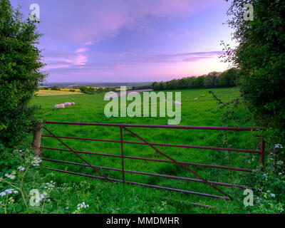 Spring sunset over South Downs field of sheep with the Solent and Isle of Wight in the background, Hampshire, UK - Stock Photo