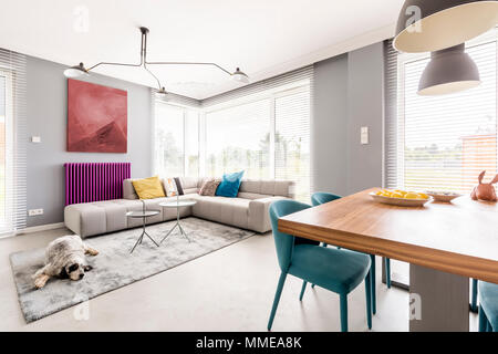 Contemporary living room for family with gray walls, beige corner sofa, big windows, painting, purple radiator and blue chairs in dining area - Stock Photo