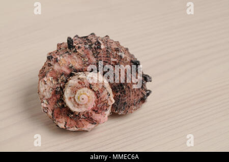 Seashell closeup on white wooden background - Stock Photo