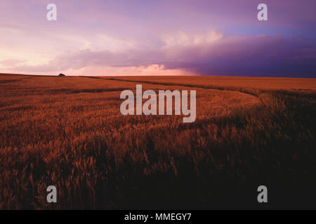 Sunset over wheat field after storm passes - Stock Photo