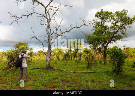 Nature photographer taking photos of giraffe on safari in Tanzania Africa - Stock Photo