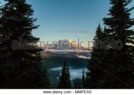 Mount Rainier looms above light clouds at sunset as fir trees surround - Stock Photo