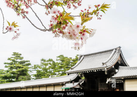 Blossoming trees in spring at Kyoto Imperial Palace, Japan - Stock Photo