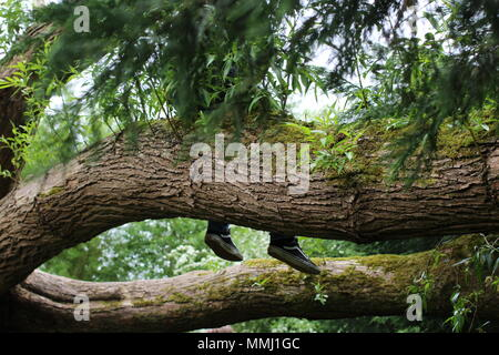 young british boy on holiday exploring nature and climbing trees. Hitchhiking wondering in the forest - Stock Photo