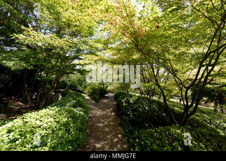 Section of the Japanese Garden with Acer Trees, Orto Botanico di Roma or Rome's Botanical Garden. The Japanese Garden was designed according to the la - Stock Photo