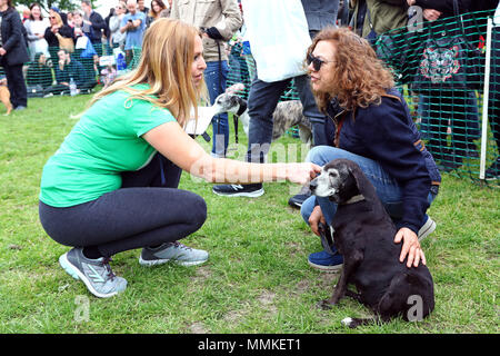 London, UK. 12th May 2018. Judge Anneka Svenska with Moko the 18 year old Dachshund Pointer cross at the All Dogs Matter Great Hampstead Bark Off, Hampstead Heat, London. All Dogs Matter is a charity dedicated to helping and re-homing dogs see www.alldogsmatter.co.uk for more information. Credit: Paul Brown/Alamy Live News - Stock Photo