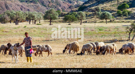 Lefka, Cyprus - April 22, 2018: Shepherd with his dog, grazing sheep and goats in a field in Lefka village