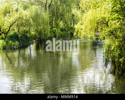 A sunny Spring day along the River Kennet in Wiltshire. - Stock Photo