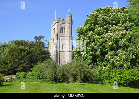 St Peter and St Paul Church, Charing, Kent, in spring with magnificent flowering horse chestnut tree (aesculus hippocastranum), England, GB, UK - Stock Photo