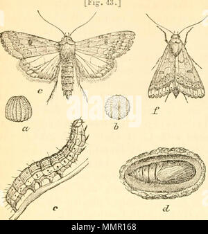 'First[-ninth] annual report on the noxious, beneficial and other insects, of the state of Missouri, made to the State board of agriculture, pursuant to an appropriation for this purpose from the Legislature of the state' (1869) Stock Photo