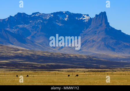Darwin's Rhea graze in the enclosures of Estancia Cerro Guido, Patagonia, Chile. The mountains of Sierra Baguales form a backdrop to the pampas of the - Stock Photo