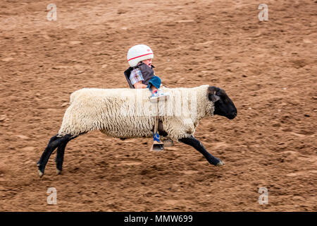 Young Cowboy Riding Sheep During Mutton Busting Event