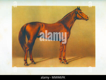 draw budenovsky's red stallion - Stock Photo