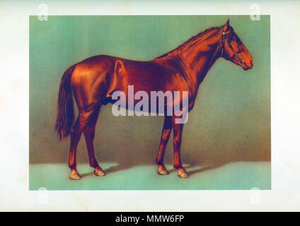 draw koystanay's stallion - Stock Photo