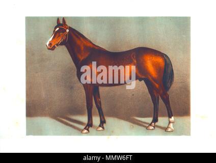 draw thoroughbred's stallion horses - Stock Photo