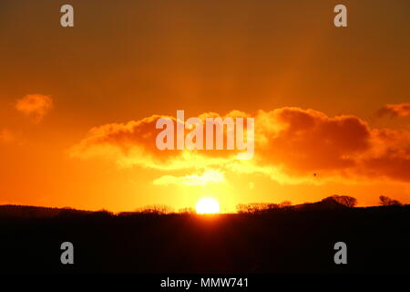 Sunset silhouetting countryside landscape including trees and hedgerow - Stock Photo