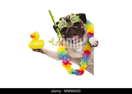funny summer pug dog with hawaiian flower garland, snorkel and goggles, holding up yellow rubber ducky, isolated on white background - Stock Photo