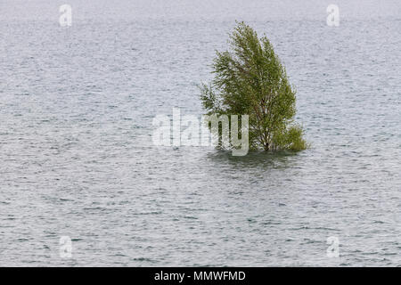 lonely birch tree in the flood - Stock Photo