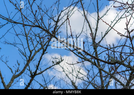 Dry branches of tree without any leafs on blue sky with white clouds background. Feeling sadness - Stock Photo