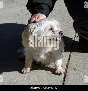 Small white mixed breed dog - Stock Photo