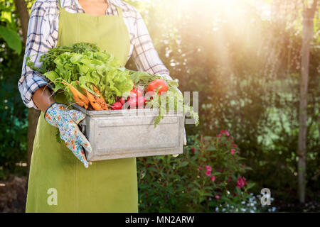Unrecognisable female farmer holding crate full of freshly harvested vegetables in her garden. Homegrown bio produce concept. - Stock Photo