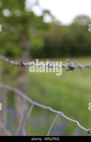 Closeup of barbed wire fence with field in background - Stock Photo