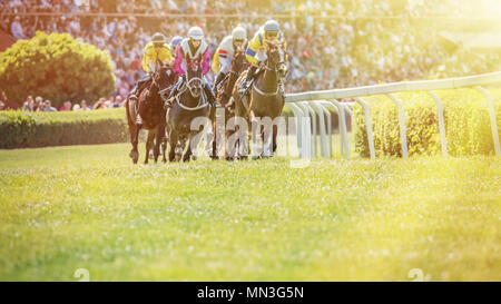 Lethbridge Horse Racing
