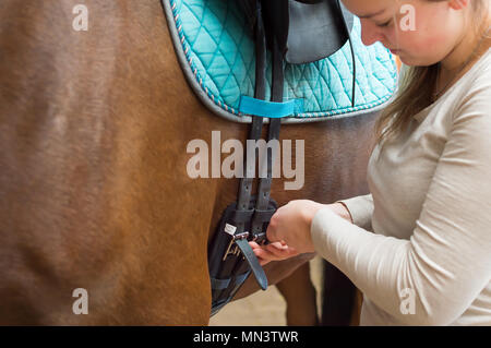 Close up shows the hands of a young rider. She pulls leather strap of the saddle. The 20 year old woman attached a saddle to her horse. - Stock Photo