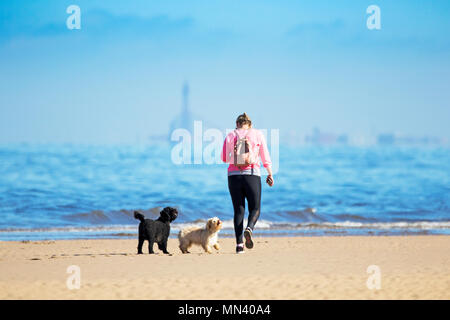 Sunny in Southport, Merseyside. 14th May 2018. UK Weather.  Beautiful Mediterranean style weather over the north west coast of England with warm temperatures, clear blue skies & golden sandy beaches as a woman walks her two dogs along the shoreline of the incoming tide on Southport beach in Merseyside.  Credit: Cernan Elias/Alamy Live News - Stock Photo