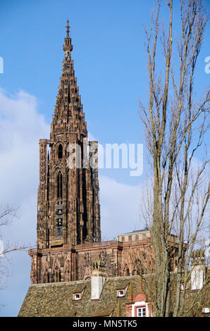 The High, or Late Gothic spire of  the Cathedral of Notre Dame de Strasbourg, seen from ground level in a neighbouring quarter. - Stock Photo