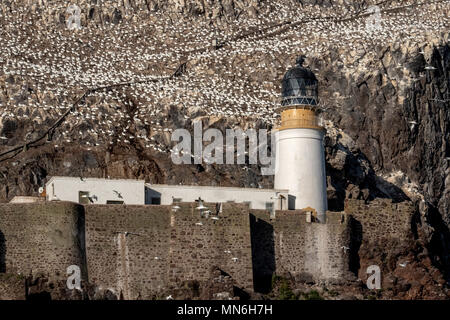 The Lighthouse and Northern Gannet (Morus bassanus) breeding colony on the Bass Rock, Scotland, UK. - Stock Photo
