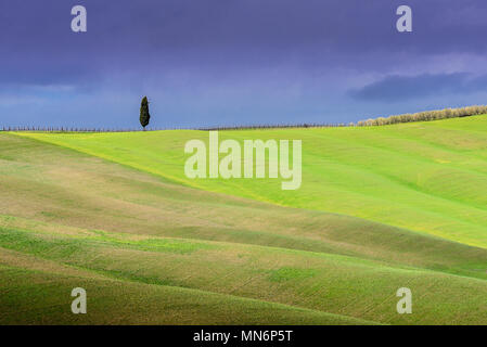Tuscany landscape, lonely tree, rolling hills with cloud shadows and sunlight on green grass in spring, Val d'Orcia, Tuscany, Italy - Stock Photo
