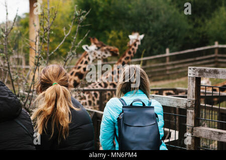 People or group of friends or guests of zoo look at giraffes - Stock Photo