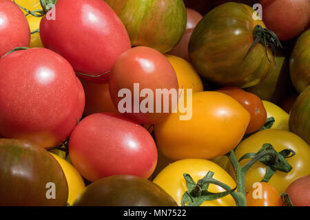 a selection of brightly coloured freshly picked tomatoes of various types on sale on a stall at borough market in central london. tomatoes stripey. - Stock Photo