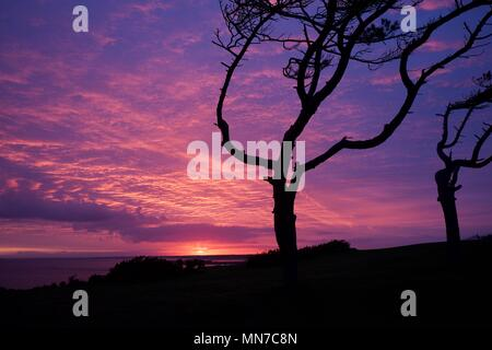 wind swept trees silhouetted at sunset over the solent on the Isle of Wight, UK - Stock Photo